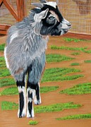 Goat Drawings - Leo by Lea Sutton