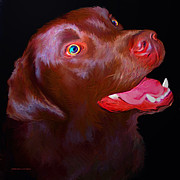 Dog Prints Digital Art - Leo the Labrador by Stephen Conroy