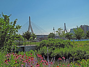 Boston Ma Framed Prints - Leonard P Zakim Bridge from Cambridge Framed Print by Barbara McDevitt