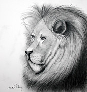 Lion Pastels - Leonard by Steve Ellenburg
