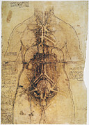 Uterus Framed Prints - LEONARDO: ANATOMY, c1510 Framed Print by Granger