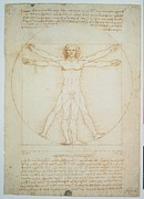 All-metal Photo Framed Prints - Leonardo Da Vinci, Vitruvian Man - Framed Print by Everett
