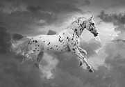 Black Leopard Posters - Leopard Appaloosa Cloud Runner Poster by Renee Forth Fukumoto