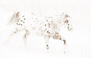 Leopard Running Framed Prints - Leopard Appaloosa Runs in Snow Framed Print by Carol Walker