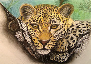Paula Steffensen Metal Prints - Leopard in a Tree I. Metal Print by Paula Steffensen