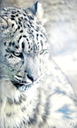 Snow Leopards Prints - Leopard Profile Print by Emily Stauring