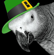 Leprechaun Parrot Print by Mim White