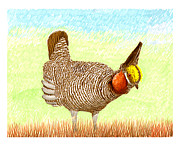 Prairies Paintings - Lesser Prairie Chicken by Jack Pumphrey
