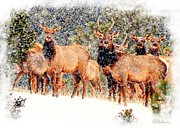 Bull Elk Digital Art Posters - Let it Snow - Barbara Chichester Poster by Barbara Chichester