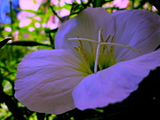 Photo Flowers - Let Me Live My Life by Allen n Lehman