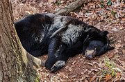 John Haldane - Let Sleeping Bears Lie