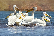 White Pelicans Framed Prints - Lets Blow This Joint Framed Print by Betty LaRue