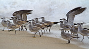 Seagull Photo Prints - Lets Blow This Joint Print by Betsy A Cutler East Coast Barrier Islands