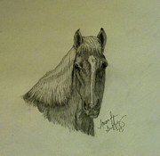 Pony Drawings Originals - Levi by Amanda Griffey
