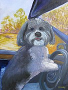 Havanese Paintings - Lexi the Havanese by Vivian Haberfeld