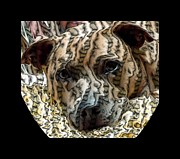 Fighting Tigers Art - Li Ti Dog by Renee Trenholm