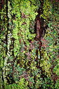 Bark Closeup Framed Prints - Lichen Framed Print by Elena Elisseeva