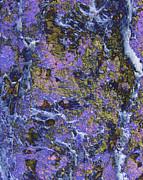 Ann Johndro-Collins - Lichen Forest