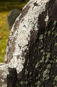 Lichen On Headstone Print by Allan Morrison