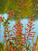 Autumn Photographs Mixed Media Prints - Life at the Pond Print by Photography Moments - Sandi