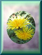 Life Is Made Up Of Dandelions Print by Patricia Keller