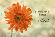 Kim Hojnacki - Life is Wonderful