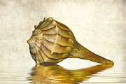 Seashell Photography Framed Prints - Life Lines 2 Framed Print by Steve Harrington