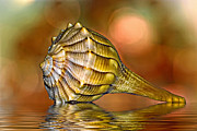 Seashell Photography Framed Prints - Life Lines Framed Print by Steve Harrington