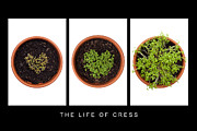 Leaf Collage Prints - Life of Cress Print by Anne Gilbert
