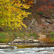 Rivers In The Fall Photo Prints - Life On The River square Print by Bill  Wakeley