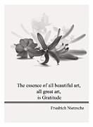 Trilby Cole - Life Quotes - F.Nietzsche