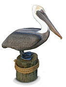 Pelican Sculpture Sculpture Originals - Life Size BROWN PELICAN Sculpture by Chris Dixon