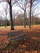Park Benches Framed Prints - Lifes Russet Hue Framed Print by Guy Ricketts