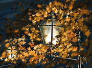 Rain Digital Art Metal Prints - Light among the leaves Metal Print by Veronica Minozzi