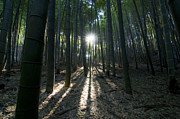 Bamboo Forest Framed Prints - Light at the End Framed Print by Aaron S Bedell