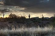 Tam Ryan - Light in the Desert