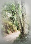 Enlightened Path Framed Prints - Light Leads the Way Framed Print by Diana Besser