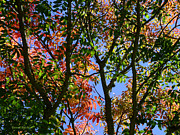 Red Leaves Photos - Light Makes The Difference by Donna Blackhall