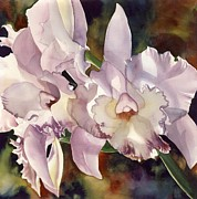 Cattleya Framed Prints - Light Pink Cattleya Orchid Framed Print by Alfred Ng