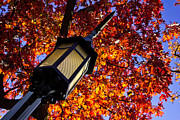 Color Change Framed Prints - Light post and Fall Leaves Framed Print by John McGraw