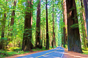 Avenue Of The Giants Prints - Light Through The Redwoods Print by Heidi Smith