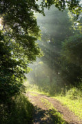 Gravel Road Photos - Light unto my Path by Thomas R Fletcher
