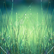 Fineartprint Posters - Light - Water and Grass Poster by Dirk Wuestenhagen