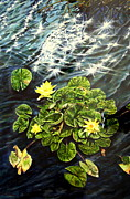Thomas Akers Metal Prints - Light Wind and Waterlilies Metal Print by Thomas Akers