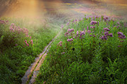 Violet Photos - Lighted Path by Bill  Wakeley
