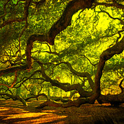 Angel Oak Photos - Lighter version 40x40 by Susanne Van Hulst