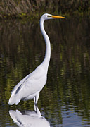 Like A Great Egret Monument Print by John Bailey