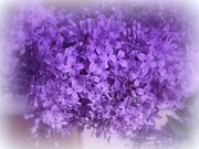 Kay Novy Framed Prints - Lilac Fantasy Framed Print by Kay Novy