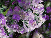 Gabriella Weninger - David - Lilac in the wind