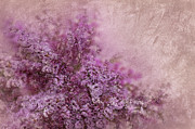 Swirl Mixed Media - Lilac Splash by Svetlana Sewell